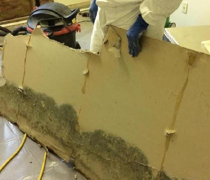 Mold Remediation for Residential and Commercial After