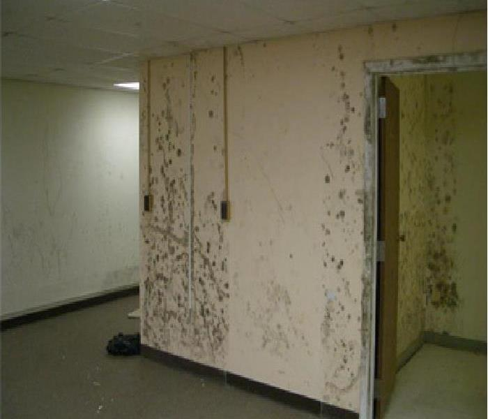 Mold Remediation for Residential and Commercial Before