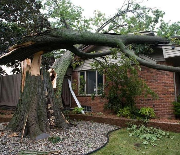 Storm Damage Preventing Tree Hazards